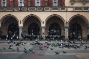 Kraków8